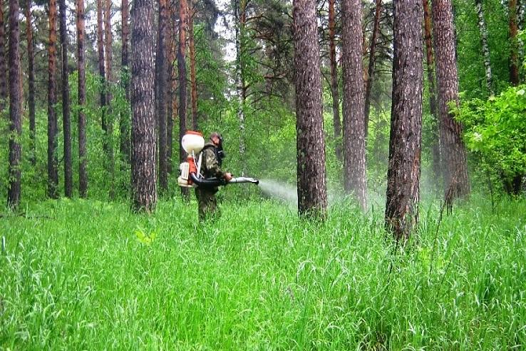 Обработка от клещей лесных массивов в Кстово